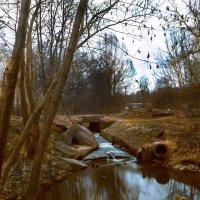 Дубки мини река :: алекс дичанский