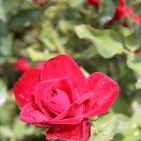 Цветочный хоровод-328. :: Руслан Грицунь