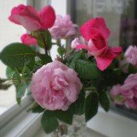Розовый вальс :: Эля Юрасова