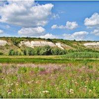 Зреют травы на покосах. :: Владимир Горбунов