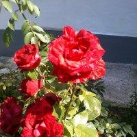 Городские цветы :: BoxerMak Mak