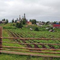 Русский Север. Село Нёнокса. Вид через картофельные грядки :: Владимир Шибинский