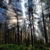 Дым и Солнце :: Александр Преображенский