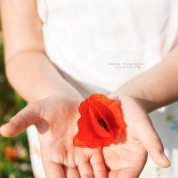 Цветок в руках :: Оксана Оноприенко