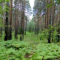 В лесу после дождя :: Елена Шемякина