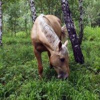 В лесу :: Виктор Киселев