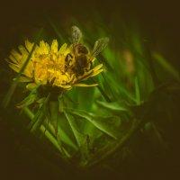 Пчёлка :: Bulat Ziganshin