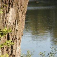 Дерево и вода :: Галина Смирнова