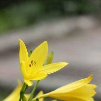 Цветочный хоровод-337. :: Руслан Грицунь