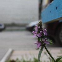 Макро в урбанизме :: Наталья Золотых-Сибирская