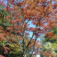 Батумский Ботанический сад :: Екатерина Кудреватых