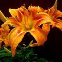 Лилии в дождливый день... :: Тамара (st.tamara)