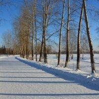 Аллея зимой :: Светлана Грызлова