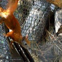 Белка в зоопарке :: Наталья (ShadeNataly) Мельник