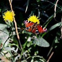 Чесно скажу мені рідко удається метелика впіймати :: Степан Карачко