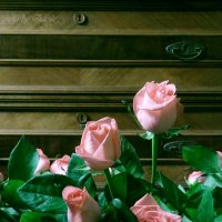 Розовая нежность :: Lady Etoile