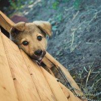 славный щенок :3 :: Alina Mazitova