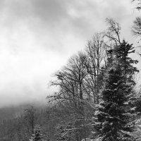 зимний лес :: Анатолий Стрельченко