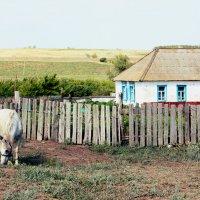В деревне :: Mikeylink K.