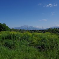 Весенние травы :: Andrad59 -----