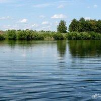 Водная гладь с зеленой изгородью :: Ирина Афонасенко