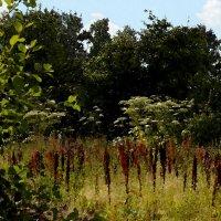 Зарастающий сад :: Наталья Лунева