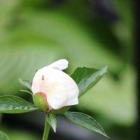Цветочный хоровод-352. :: Руслан Грицунь
