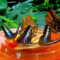 бабочки :: Александр Корчемный