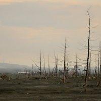 Мертвый лес... :: Витас Бенета