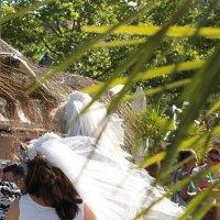 Розовая свадьба :: Elen Dol