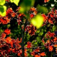 молодая листва в контровом свете :: Александр Прокудин