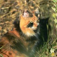 Камышовый кот, вернее кошка :: Valeriy(Валерий) Сергиенко