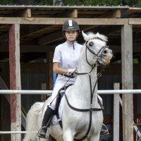 Перед стартом волнуется только конь) :: Татьяна Степанова