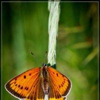 Бабочка :: Рашит Усманов