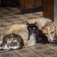 Семья- два кота и я! :: Владимир Гусаров