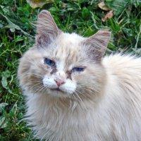 Плачущий кот :: Сергей Кунаев