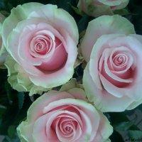 Цветочный хоровод-357. :: Руслан Грицунь