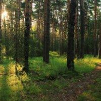 Лучистой негой солнечное утро... :: Лесо-Вед (Баранов)