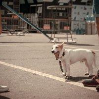 Собака и ноги. :: Алексей Петров
