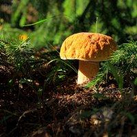 Белый гриб. :: сергей