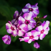 Цветы :: Александр Горелов