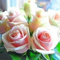 Нежность роз :: Анастасия Nikonова
