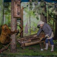 Беловежская пуща, музей природы. :: Сергей Хомич