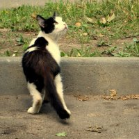 Присмотрелся, удивился! :: Ирина Олехнович