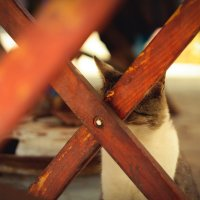 кот играет в прятки :: Виктория Чуб