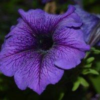Цветок :: Наталья Ковалева