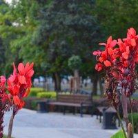Необычной красоты цветок :: Наталья Ковалева