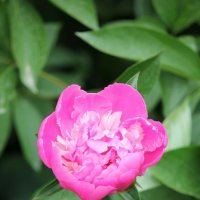 Цветочный хоровод-374. :: Руслан Грицунь