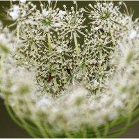 Божественный нектар :: galina bronnikova