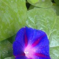 Солнечный цветок :: Serg